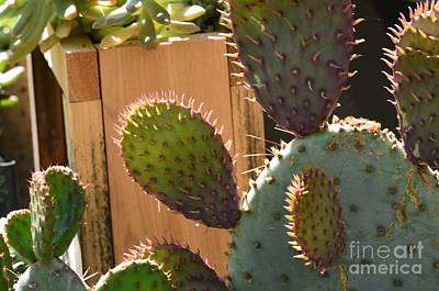 Photograph - Cactus Glow by Maria Urso