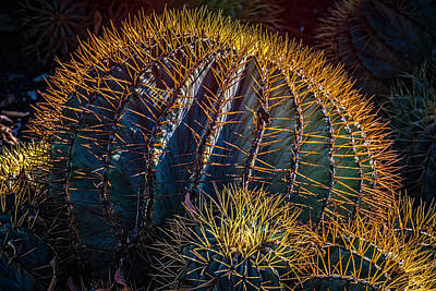 Photograph - Cactus by Harry Spitz