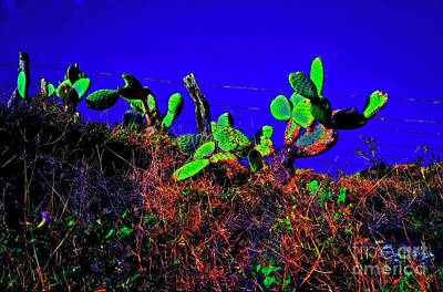 Photograph - Cactus Hawaii Big Island Road Side  by Tom Jelen