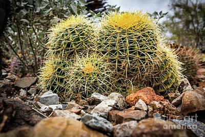 Photograph - Cactus Hay #2 by David Levin