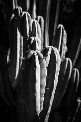 Photograph - Cactus IIi by Peter OReilly