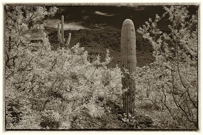 Photograph - Cactus In A Different Light by Michael McGowan