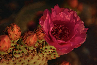 Photograph - Cactus In Bloom by Theo O'Connor