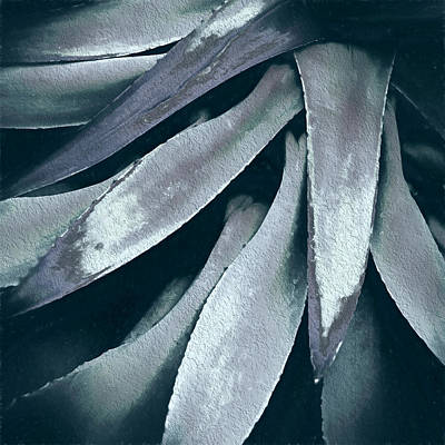 Art Print featuring the photograph Cactus In Blue And Grey by Julie Palencia