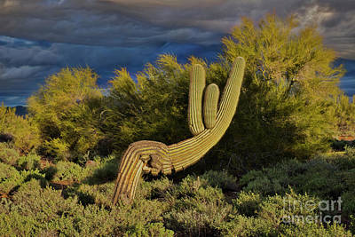 Photograph - Cactus In Recline by David Arment