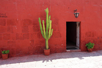 Photograph - Cactus In Santa Catalina Monastery by Aidan Moran