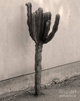 Painting - Cactus In Sepia by Gregory Dyer