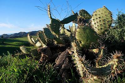 Photograph - Cactus In The Mountains by Matt Harang