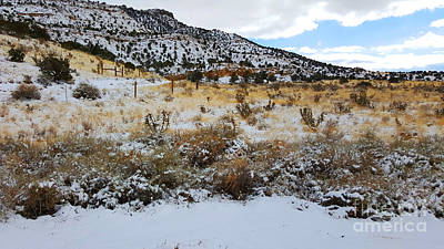 Photograph - Cactus In The Snow by Robert WK Clark