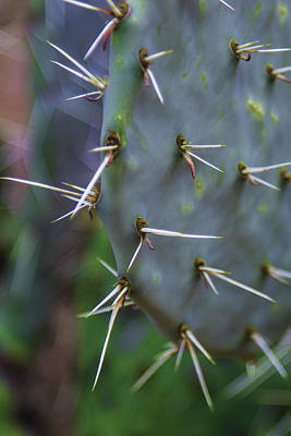 Photograph - Cactus In Zion  by John McGraw