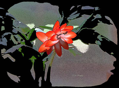 Photograph - Cactus Jungle by Jeanette C Landstrom