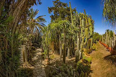 Photograph - Cactus Jungle by Mark Perelmuter
