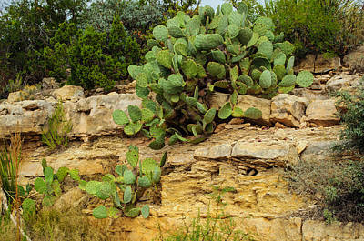 Photograph - Cactus Landscape by Tikvah's Hope