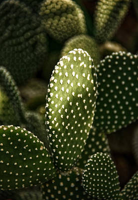 Photograph - Cactus Light by Kathi Isserman