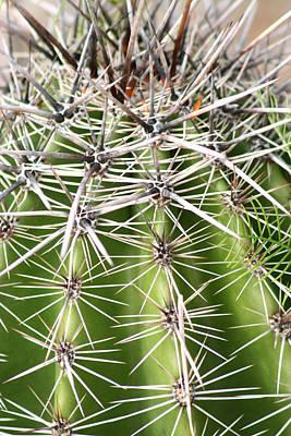 Photograph - Cactus by Lilian Forsyth