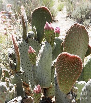 Photograph - Cactus Luv by L Cecka