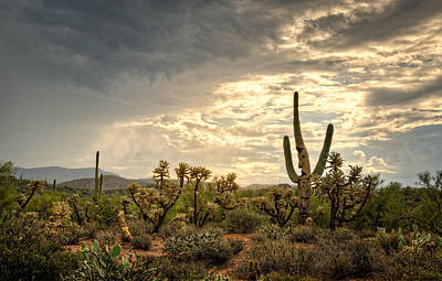 Photograph - Cactus Man Greeting The Morning  by Saija Lehtonen