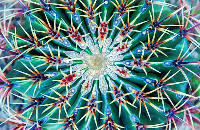 Photograph - Cactus Mandala by John Bartosik