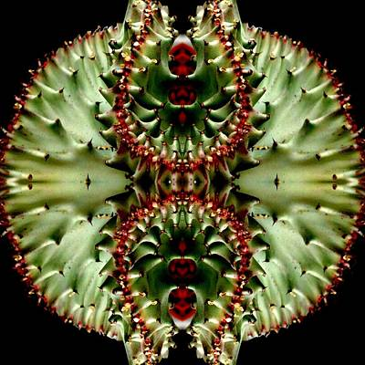 Photograph - Cactus Mandala by Marianne Dow