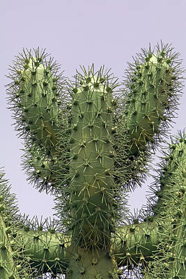 Photograph - Cactus Metallicus by Tony Murtagh
