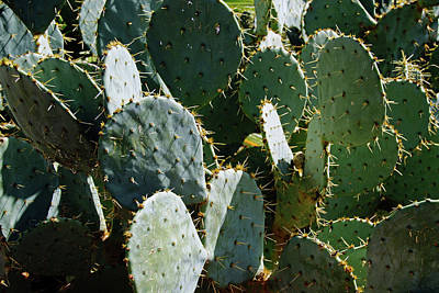 Photograph - Cactus by Mike Murdock