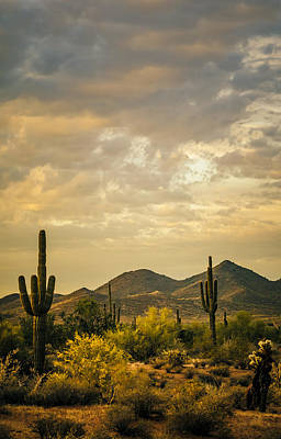Photograph - Cactus Morning by Don Schwartz