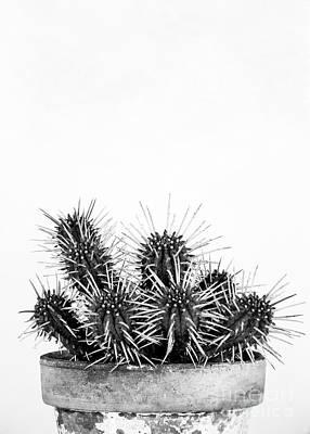 Cactus Nature Art Print by Ana Martinez