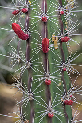 Photograph - Cactus Needles 5930-041118-1 by Tam Ryan