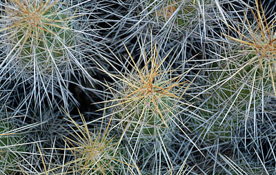 Photograph - Cactus Needles From The Top by Bruce Gourley