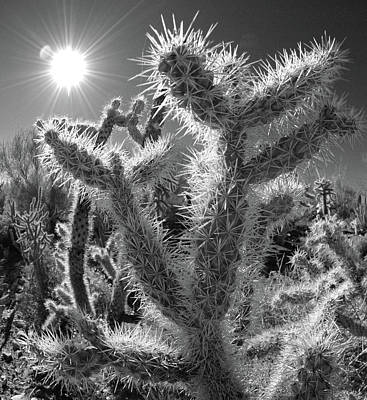 Photograph - Cactus No. 4-2 by Sandy Taylor