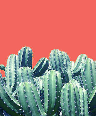 Cactus On Coral Art Print