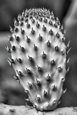 Photograph - Cactus Pad In Black And White by Jay Blackburn