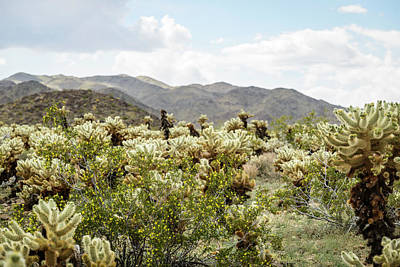 Photograph - Cactus Paradise by Amyn Nasser