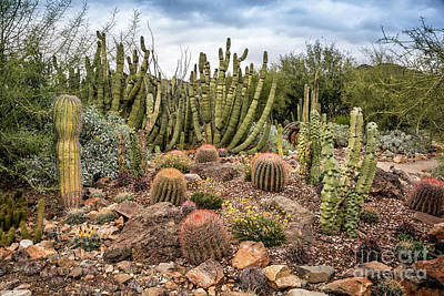 Photograph - Cactus Party by David Levin
