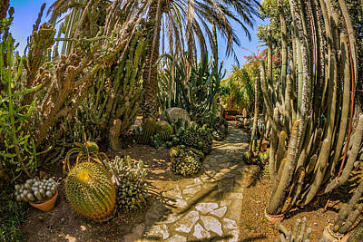 Photograph - Cactus Path by Mark Perelmuter