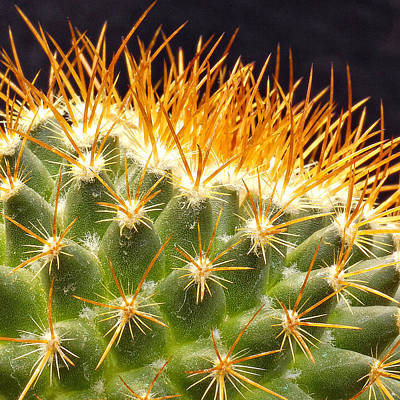 Photograph - Cactus by Peg Runyan
