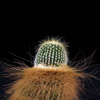 Photograph - Cactus Photo by Catherine Lau