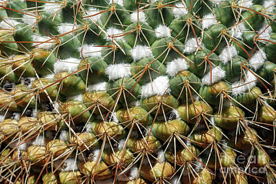 Photograph - Cactus Plant by George Atsametakis