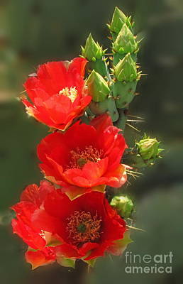 Photograph - Cactus Red Beauty by Marilyn Smith