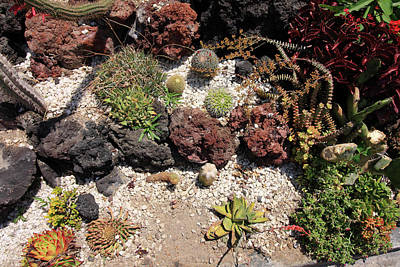 Photograph - Cactus Rock Garden by Aidan Moran