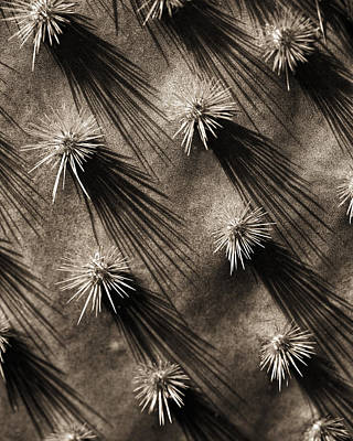 Photograph - Cactus Shadows by Bob Coates