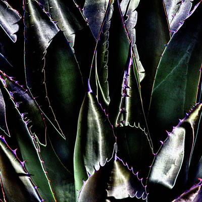 Digital Art - Cactus Sheen by David Patterson