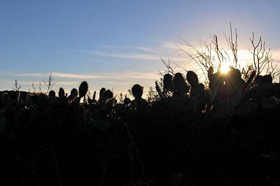 Photograph - Cactus Silhouettes by Matt Harang