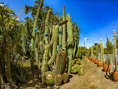 Photograph - Cactus Street by Mark Perelmuter
