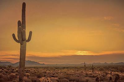 Photograph - Cactus Sunrise by Don Schwartz