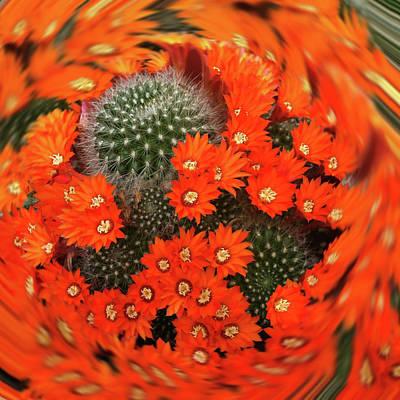 Cactus Swirl Art Print