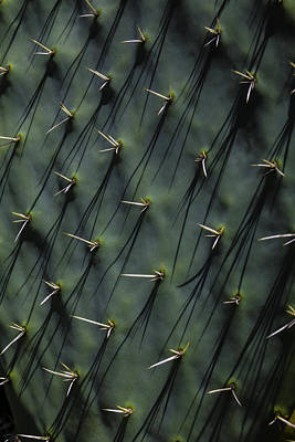 Cactaceae Photograph - Cactus Thorn Shadows by Garry Gay