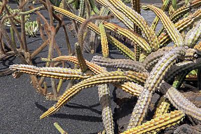 Photograph - Cactus by Tony Murtagh