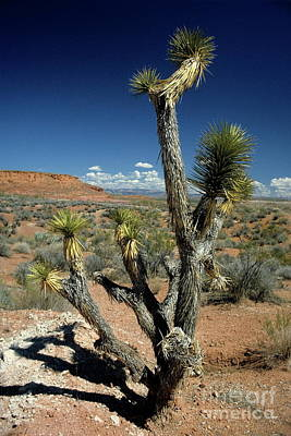 Cactus Tree In The Desert At Bryce Canyon National Park Art Print