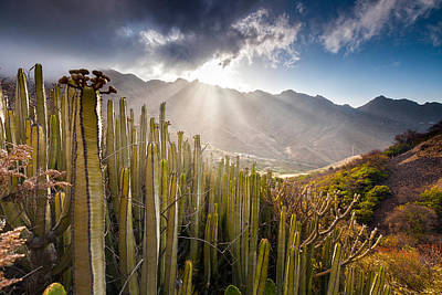 Tenerife Photograph - Cactus Valley by Evgeni Dinev